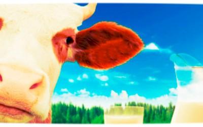 Indicazione obbligatoria prodotti lattiero-caseari